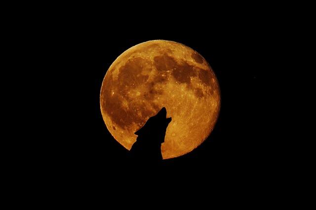 スーパームーンに遠吠えする狼