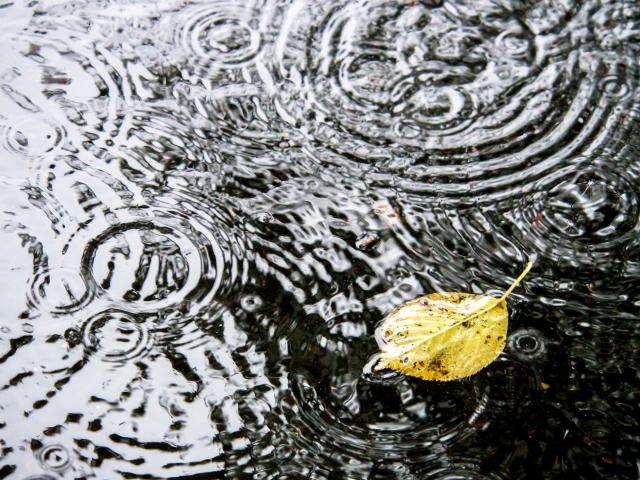 梅雨の期間に雨が降る水たまり