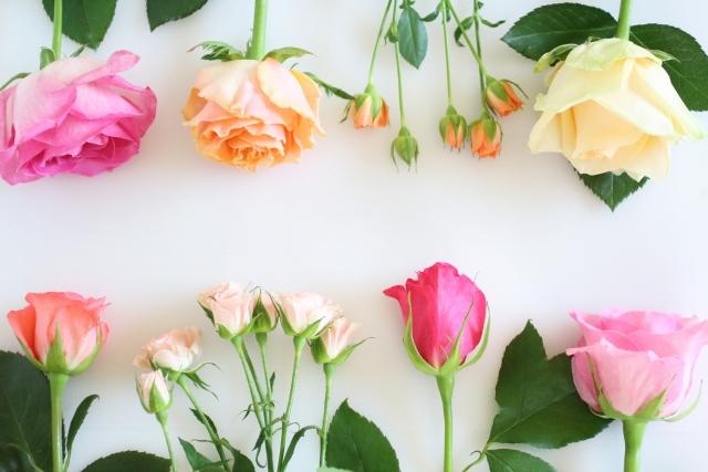 色々な種類のバラの花